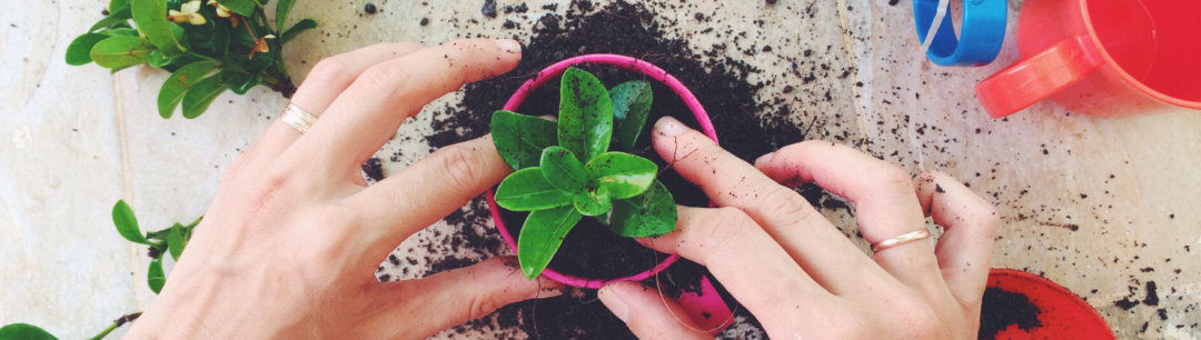 gardening blog for sale on flippa